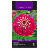 Цветы Цинния гиганты бенари парпл 10шт Поиск